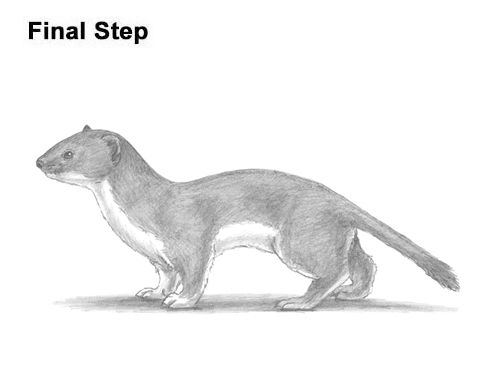 How to Draw a Common Least Weasel