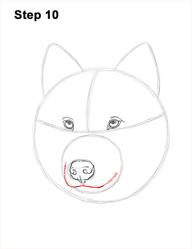 How to Draw Gray Wolf Head Portrait 10