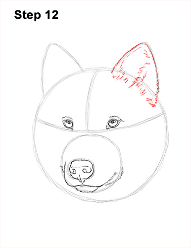 How to Draw Gray Wolf Head Portrait 12