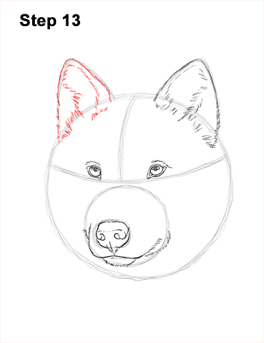 How to Draw Gray Wolf Head Portrait 13