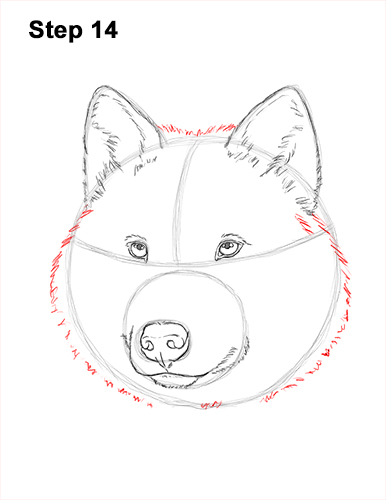 How to Draw Gray Wolf Head Portrait 14