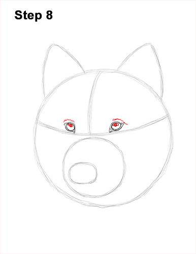 How to Draw Gray Wolf Head Portrait 8