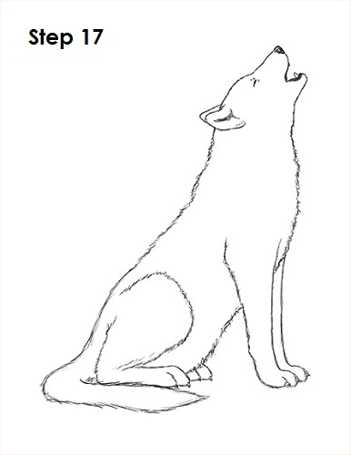 Draw Wolf Howling 17