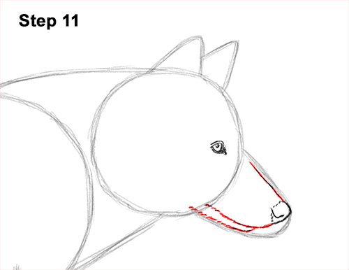 How to Draw a Grey Timber Wolf Running Hunting 11