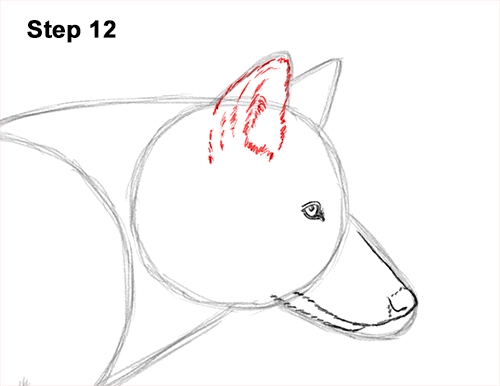 How to Draw a Grey Timber Wolf Running Hunting 12
