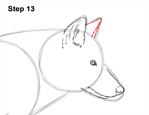 How to Draw a Grey Timber Wolf Running Hunting 13
