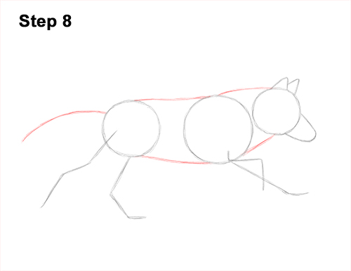 How to Draw a Grey Timber Wolf Running Hunting 8