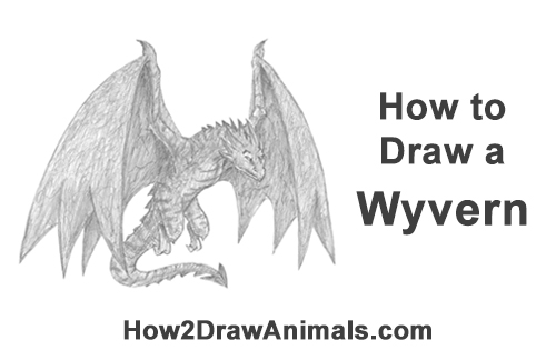 How to Draw Wyvern Dragon Wings Flying