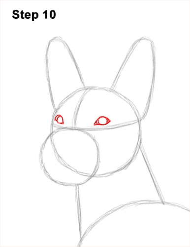 How to Draw a Xoloitzcuintle Mexican Hairless Dog 10