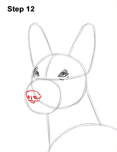 How to Draw a Xoloitzcuintle Mexican Hairless Dog 12