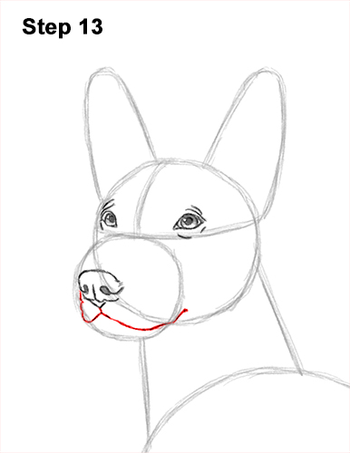 How to Draw a Xoloitzcuintle Mexican Hairless Dog 13