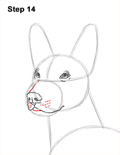 How to Draw a Xoloitzcuintle Mexican Hairless Dog 14