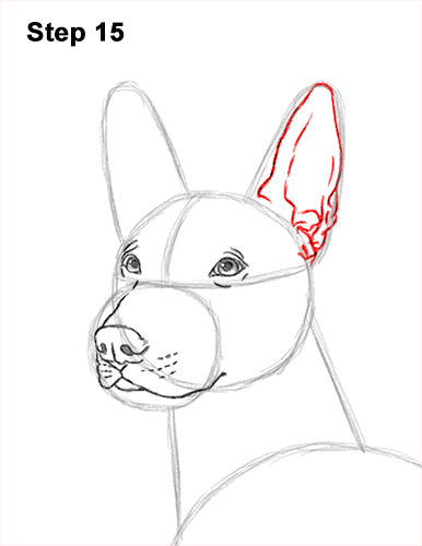 How to Draw a Xoloitzcuintle Mexican Hairless Dog 15