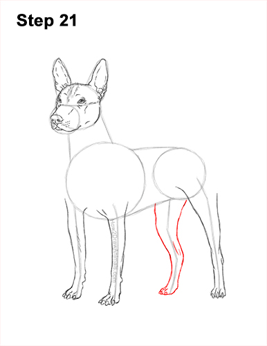 How to Draw a Xoloitzcuintle Mexican Hairless Dog 21