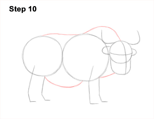 How to Draw a Domestic Himalayan Tibet Yak 10