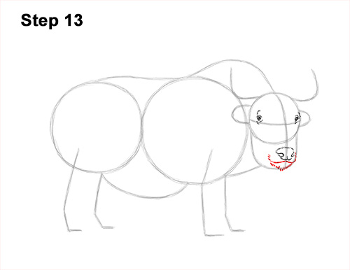 How to Draw a Domestic Himalayan Tibet Yak 13