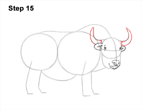 How to Draw a Domestic Himalayan Tibet Yak 15