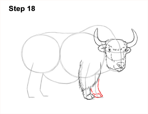 How to Draw a Domestic Himalayan Tibet Yak 18