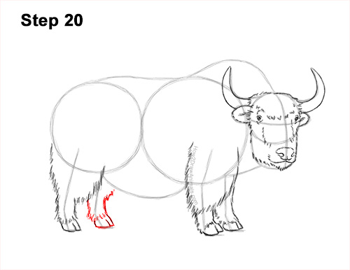 How to Draw a Domestic Himalayan Tibet Yak 20