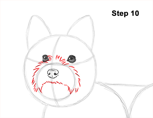 Draw Yorkshire Terrier 10