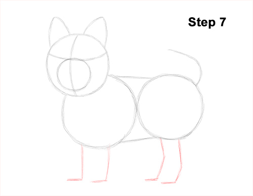 Draw Yorkshire Terrier 7