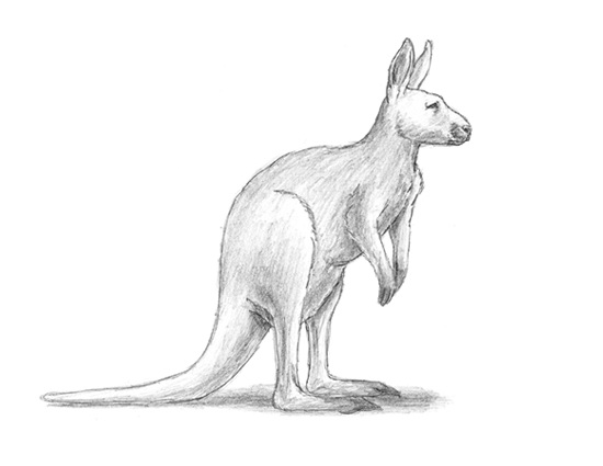 How to Draw a Kangaroo