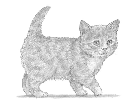 How to Draw a Tabby Kitty Kitten Cat