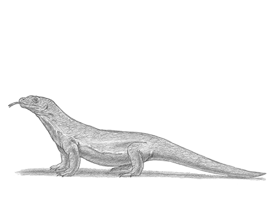 How to Draw a Komodo Dragon