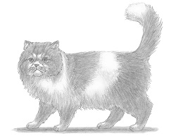 How to Draw a Cat (Persian)