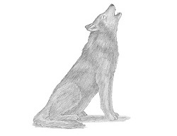 How to Draw a Gray Wolf Howling